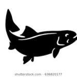 fish agra